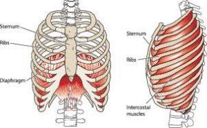 Breathing Diagram FINAL